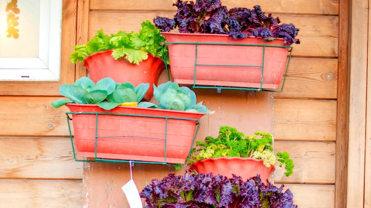 20 HANGING VEGETABLE GARDEN IDEAS FOR SMALL SPACES ...